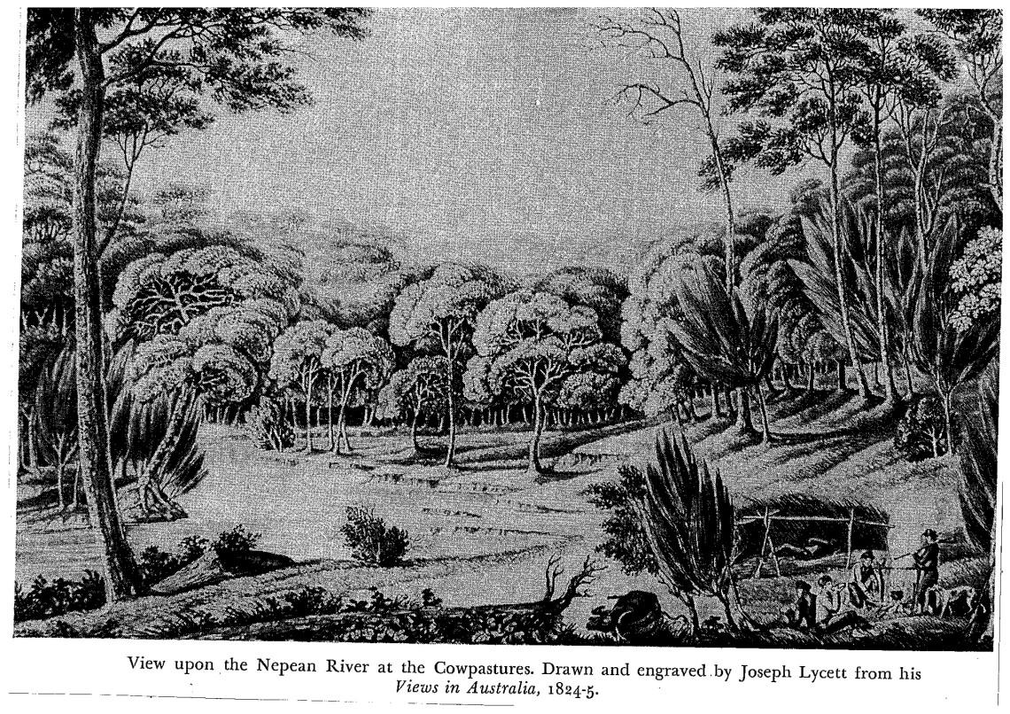 Nepean River Cowpastures