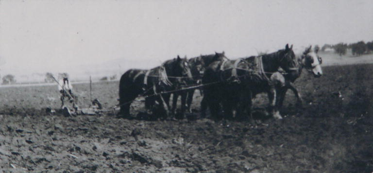 A 1917 view of horse drawn plough on Perkins dairy farm at Cawdor