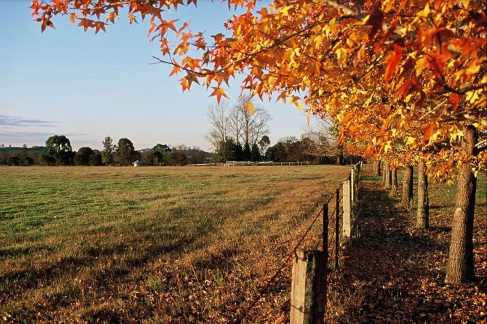 Elderslie Autumn Scene Camden Valley Way 2014 (IWillis)