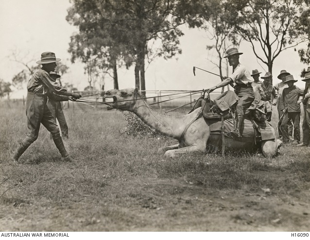 Menangle Army Camp Camel Corps 1917 [2] AWM