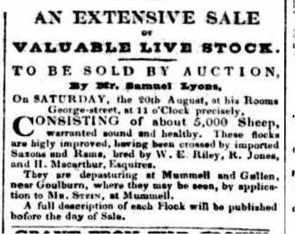 Mummel Sheep Sale 5000 Australian 1836Aug5