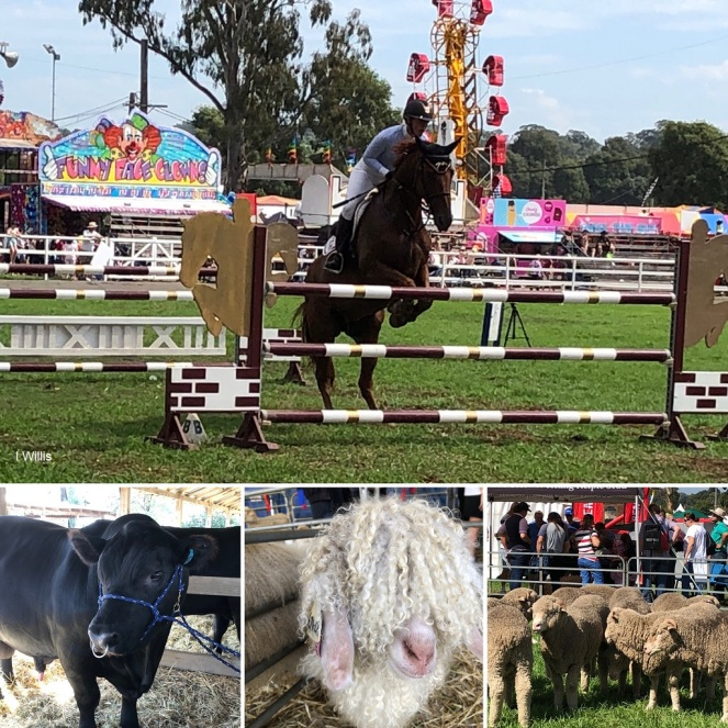 Camden Show collage 2019 IW