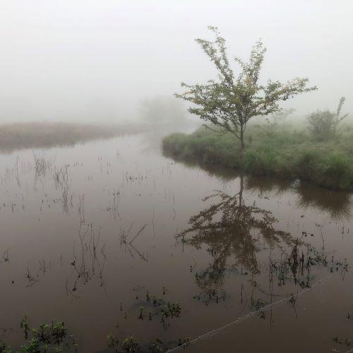 Camden Town Farm Miss Llewella Davies Pioneers Walkway Pond fog 2020 IW lowres