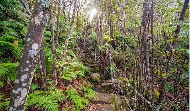 Wollongong Illawarra Rainforest Sublime Point Walking Track Bulli 2000 NCubbin